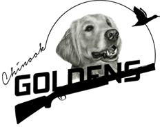 Chinook Goldens Logo